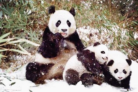 超有爱的动物家庭